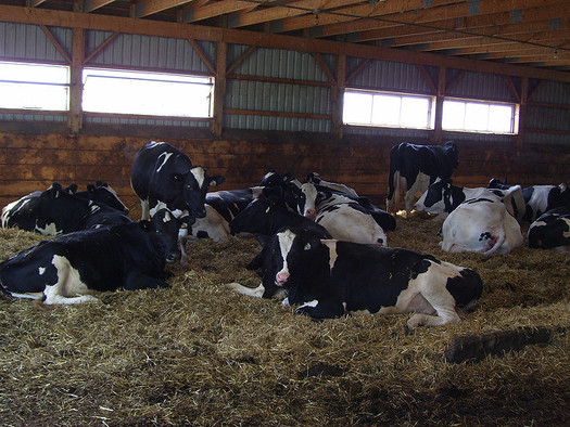 In recent decades, dairy production has shifted from the pasture to indoor confinement. (Mike Bowler/Flickr)