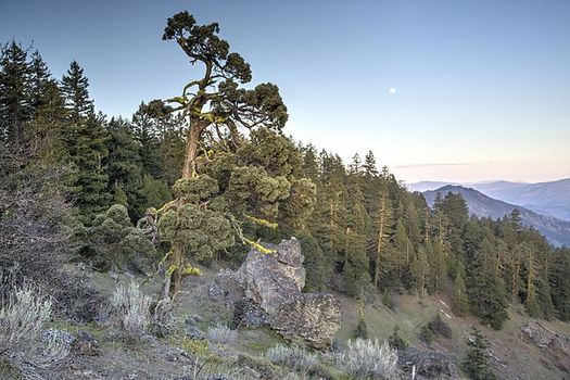 The federal government is calling for an unspecified reduction in size for Cascade-Siskiyou National Monument, on the California-Oregon border.(BLM)