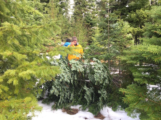 Washington state ranks fourth in the nation for Christmas tree production. (Brian Mize/The Nature Conservancy)