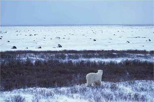 The final tax bill keeps a provision opening the Arctic National Wildlife Refuge to oil drilling. (U.S. Fish and Wildlife Service)