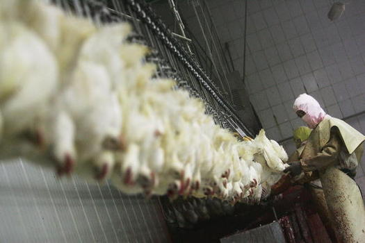 Food-safety advocates say faster production-line speeds would jeopardize the safety of poultry workers, as well as the safety of the finished product. (Getty Images)