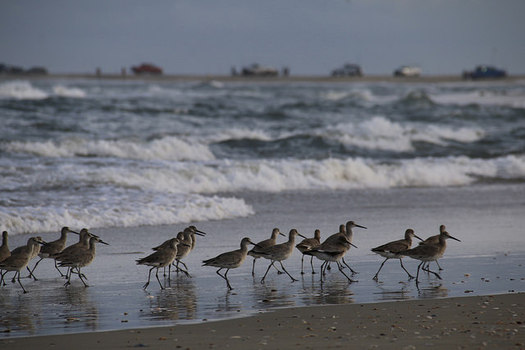 Drilling off the coast of North Carolina is predicted to harm wildlife and discourage the tourism and fishing industry. (Michael Herzog/flickr)