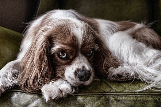 According to the ASPCA, a study in Wisconsin found 68 percent of domestic-violence survivors reported their abusers were also violent toward their animals. (Pixabay)