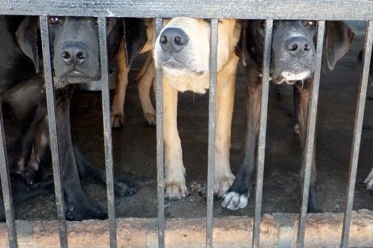 Nebraska requires that veterinarians report suspected animal abuse. (kimdewor0/Pixabay)