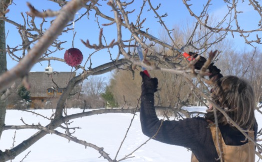 Proper pruning of organic apple trees is one of a number of topics to be covered at a March workshop by the Michael Fields Agricultural Institute. (MFAI)