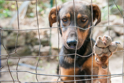 Nearly 70,000 homeless dogs and cats die in New Mexico animal shelters each year. (americanhumane.org)