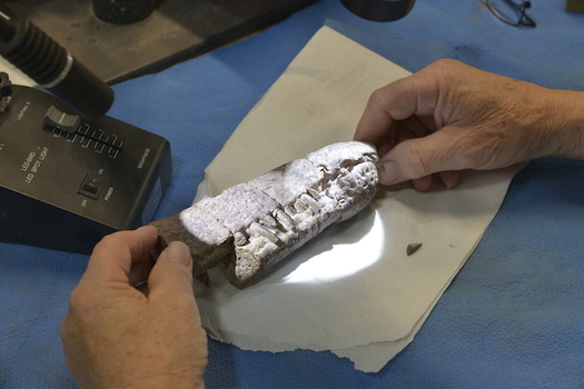 A site containing fossils dating back 220 million years could be at risk if efforts to shrink Bears Ears National Monument are successful. (The Wilderness Society)