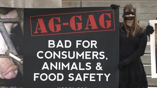 "Journalistic expos�s of cruelty or unsafe practices in Iowa's animal agriculture industry were stymied by passage of the state's ""ag-gag"" law in 2012. (bawl.org.au)"