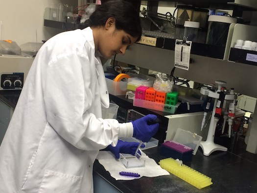 Haniya Shareef of Lincoln Park Academy in Fort Pierce works on her research in a lab for the Regeneron Science Talent Search. (Haniya Shareef)