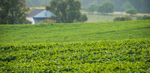 There are more than 10,000 soybean producing farms in Michigan. (usda.gov)