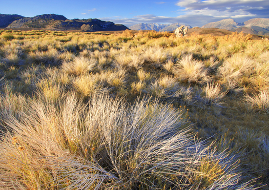The Trump administration wants to upend a plan to protect the Southern California desert that took 8 years to negotiate. (bigwest1/iStockphoto)