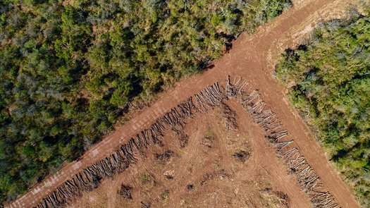 Advocates of changing the way biofuels are made say current standards encourage rampant deforestation in places like Argentina, where farmers are clearing land illegally to grow soybeans. (Jim Wickens/Ecostorm)