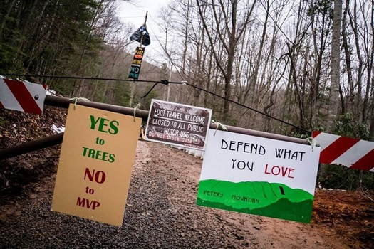 """Tree sitters"" protesting the Mountain Valley Pipeline have occupied trees on the pipeline path for more than a month. (Appalachians Against Pipelines)"