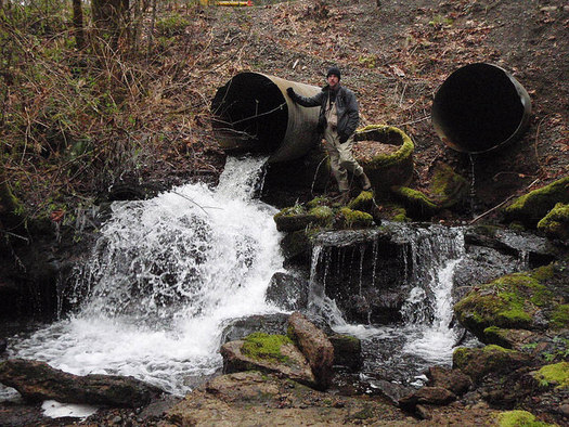 Poorly designed culverts can make it nearly impossible for salmon to swim upstream to spawn. (Jerilyn Walley/Flickr)