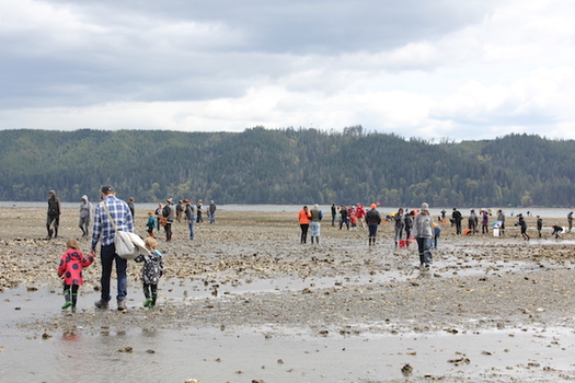 "The Hama Hama Company hosted the ""Hama Hama OysteRama,"" inviting families to the beach to harvest their own oysters. (The Nature Conservancy)"