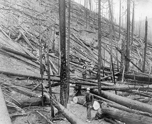 The Great Fire of 1910 in Montana and the Northwest changed the way the U.S. Forest Service managed fires. (National Photo Company/Library of Congress)