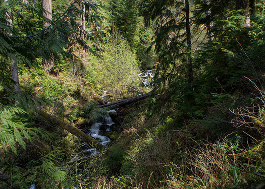 Timber and environmental interests have clashed in management of forests, including those in and around Olympic National Park. (ChelseaWa/Flickr)