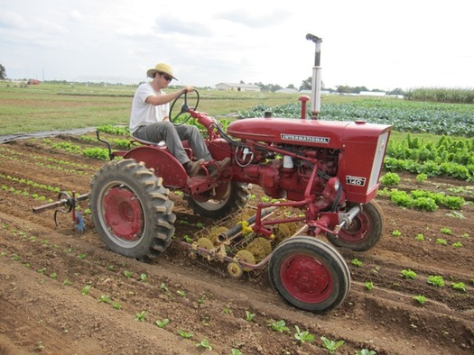 Mark Williams will give an overview of mechanical and cultural controls used on his organic farm during a summer tour series. (Mark Williams)