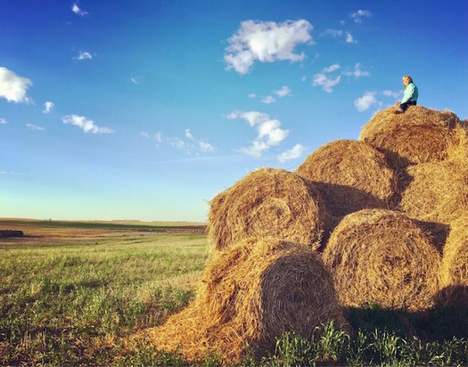 North Dakota farmers hope to find predictability in this year's Farm Bill. (Clairegran/Twenty20)