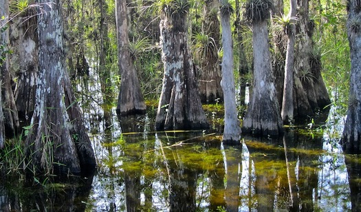 The Land and Water Conservation Fund has invested more than $1 billion to protect Florida�s outdoor places, protect water resources, increase sportsmen's access and build local parks. (Big Cypress National Preserve/Wikimedia Commons)