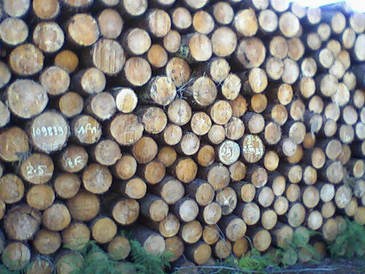 Methyl bromide reduces the spread of invasive pests when logs are exported, but it comes at a cost to the health of residents and the ozone layer. (Anna L Martin/Flickr)