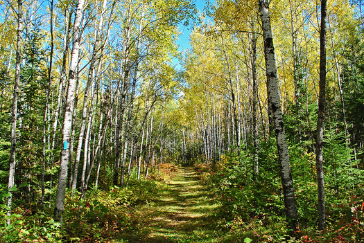 The Land and Water Conservation Fund has protected lands in Wisconsin such as the North Country National Scenic Trail. (Aaron Carlson/Flickr)