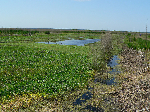 The Land and Water Conservation Fund helps support and protect places like Paynes Prairie Preserve State Park and hundreds of other projects across the state. (Francis Storr/Flickr)