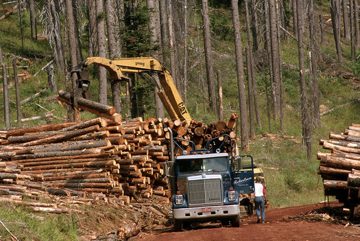 Amendments to the 2018 Farm Bill could lead to more salvage logging on public lands. (U.S. Forest Service/Flickr)