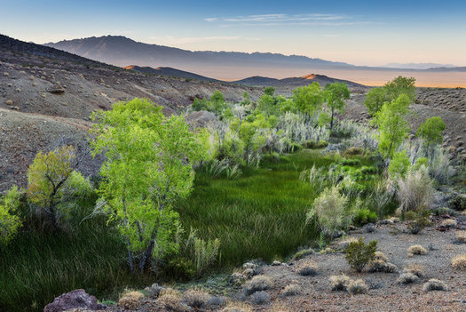 Conservation groups fear that Bonanza Spring in the Mojave National Preserve could dry up, endangering wildlife, if the Cadiz Water Project goes forward. (Michael Gordon)