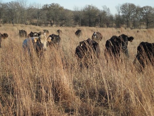 Ebel Grasslands Ranch sits on 525 acres of native grasses near Sulphur Springs, where it has been a family farm for more than 100 years. (Ebel Grasslands Ranch)
