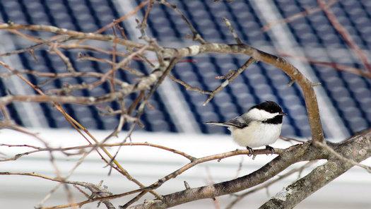 In Minnesota, solar sites double as pollinator habitat with native plants feeding hummingbirds, bees and butterflies. (audubon.org)