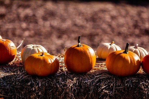 Pumpkins for sale at Maryland stores are more likely to be trucked in from other states this year, as record rainfall squashed the pumpkin-growing season. (Grantbahk/Pixabay)