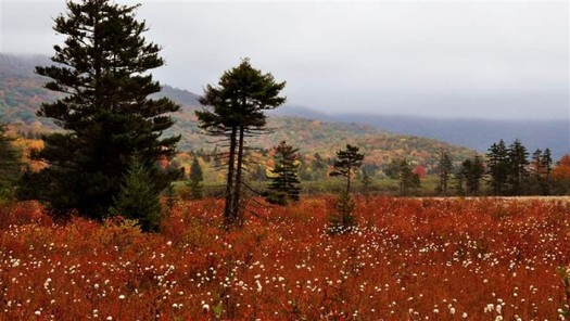 Public forestland such as Cranberry Glades is central to West Virginia's identity. (Mike Costello)
