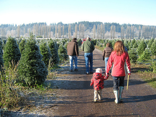 As it grows, a single tree can absorb as much as 26 pounds of carbon dioxide from the atmosphere each year, says the Wisconsin Christmas Tree Producers Assn. (Glenn Fleishman/Flickr)