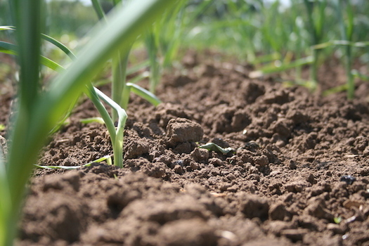 The 2018 National Climate Assessment warned that agricultural productivity in the Midwest could drop by 25 percent in the next 30 years without technology advances and changes in crop production. (soilassociation.org)