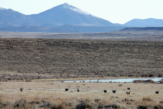A watchdog group says public records helped it uncover oil and gas-industry requests for changes to the Greater Sage Grouse Management Plan. (Katie Theule/USFWS)