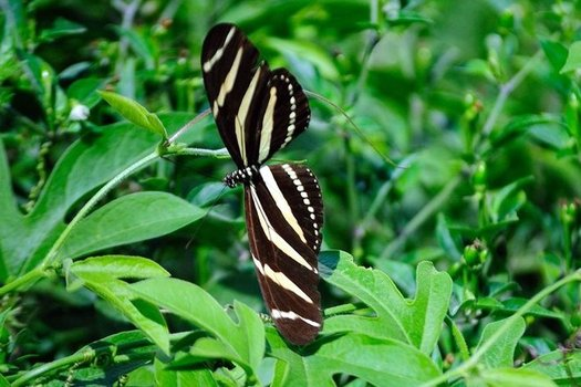 The National Butterfly Center in Mission is one of seven Texas wildlife conservation areas that could be affected by President Donald Trump's border wall expansion. (National Butterfly Center)
