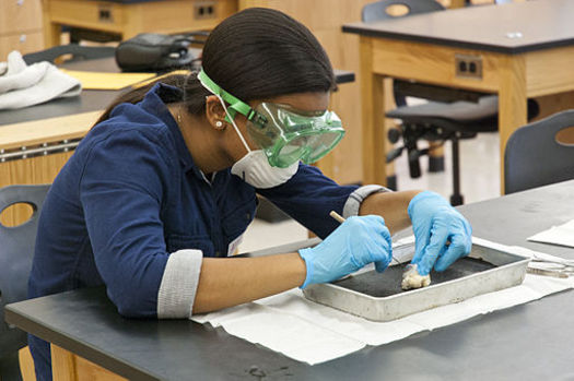 Hundreds of thousands of animals are dissected each year in California schools, which have 6.2 million students in K-12. (Evan Amos/Wikimedia Commons)