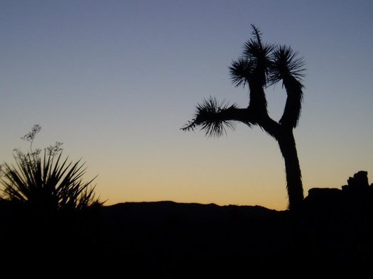 A new public-lands package would expand Joshua Tree National Park. (Wild Earth Guardians)