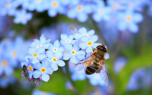 Declining pollinator populations could have alarming consequences for natural ecosystems, as well as food production for people. (cocoparisienne/Pixabay)