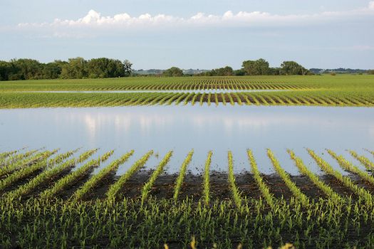 Some Iowa farmers say this was the first May in which they couldn't plant any crops because of an extremely wet and cold spring. (iowaenvironmentalfocus.org)