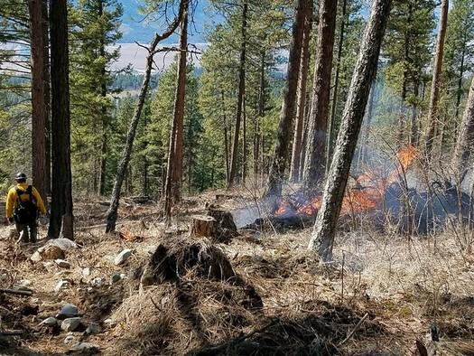 Una investigadora de incendios dice que su estudio muestra que deber�an destinarse m�s d�lares federales a los fuegos prescritos, como medio para prevenir los incendios forestales.  (U.S. Forest Service/Flickr)
