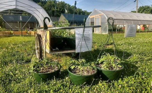 A farm in Berea has partnered with a local substance-abuse treatment center to help women in recovery with job training. (Facebook/Sustainable Berea)