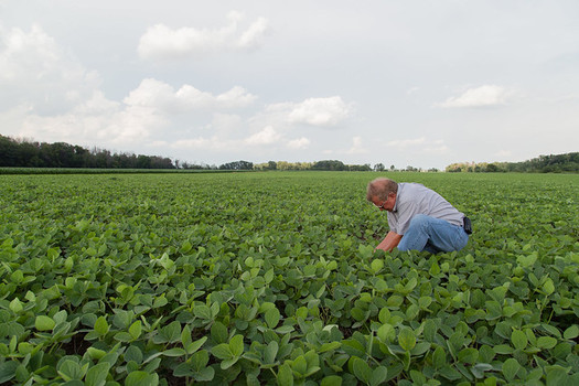 More than half of the Trump administration's trade war bailouts for farmers went to just one tenth of the program's recipients. (United Soybean Board/Flickr)