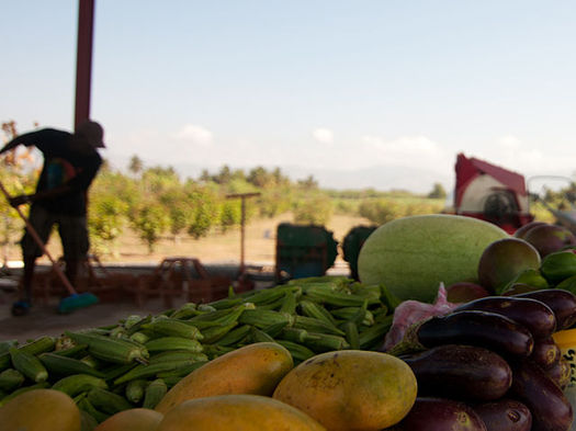 A new program gives grants to food pantries across Colorado to purchase produce, dairy and protein from Colorado producers. (USAID)
