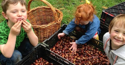 Some Iowa farmers are diversifying operations by growing chestnut trees, finding a strong market demand and a high profit potential per acre. (chestnutfestival.org)