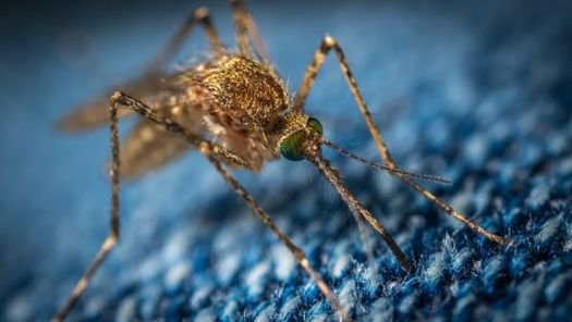"Missouri DHSS updates its West Nile virus data through the end of October, even in years like this one when infections have been considered ""light."" (Unsplash)"