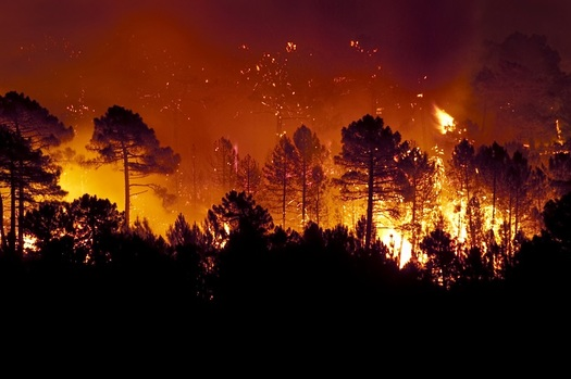 Climatologists say raging wildfires in the Amazon rainforest and in other parts of the world are attributable to global warming. (IAH/AdobeStock)