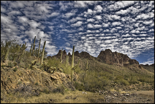 The Ironwood National Forest in one of dozens of tracts of public lands in Arizona managed by the federal Bureau of Land Management. (BLM)