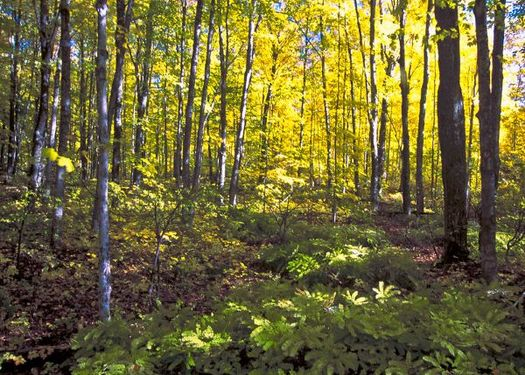 Hiawatha National Forest has 8,000 inventoried roadless acres. (Bob Nichols/USDA)